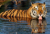 TGR 01 LS0001 01