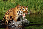 TGR 01 LS0002 01