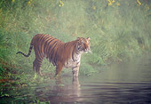 TGR 01 LS0004 01
