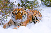 TGR 01 NE0001 01