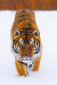 TGR 01 NE0002 01