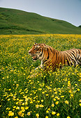 TGR 01 RC0001 01