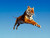 TGR 01 RK0001 01