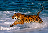 TGR 01 RK0007 08