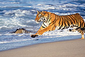 TGR 01 RK0012 18