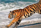 TGR 01 RK0014 03