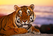 TGR 01 RK0045 10