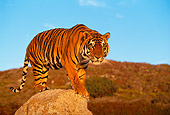 TGR 01 RK0058 03