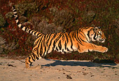 TGR 01 RK0070 01