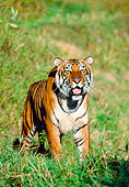 TGR 01 RK0076 01