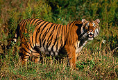 TGR 01 RK0077 01