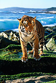 TGR 01 RK0082 12