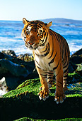 TGR 01 RK0082 21