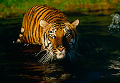 TGR 01 RK0092 05