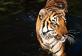 TGR 01 RK0092 18