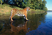 TGR 01 RK0103 01