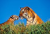 TGR 01 RK0105 04