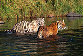 TGR 01 RK0116 01