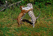 TGR 01 RK0117 08