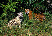 TGR 01 RK0122 04