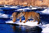 TGR 01 RK0142 07