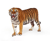 TGR 01 RK0198 35