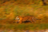 TGR 01 RK0217 04