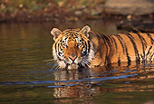 TGR 01 RK0236 02