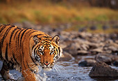 TGR 01 RK0253 04