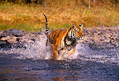 TGR 01 RK0255 08