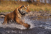 TGR 01 RK0255 13