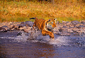 TGR 01 RK0257 15