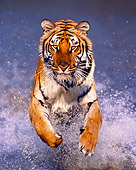 TGR 01 RK0258 06