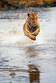 TGR 01 RK0259 28