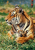 TGR 01 RK0280 05