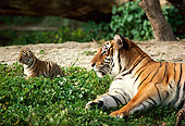 TGR 01 RK0287 02
