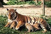 TGR 01 RK0288 03