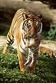 TGR 01 RK0290 05
