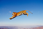 TGR 01 RK0309 16