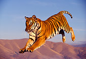 TGR 01 RK0309 25