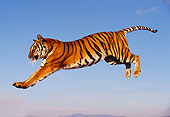 TGR 01 RK0309 31