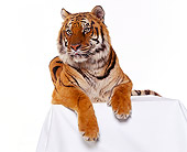 TGR 01 RK0324 04