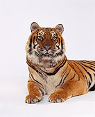 TGR 01 RK0327 01