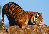TGR 01 RK0400 05