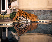 TGR 01 RK0466 01