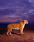 TGR 01 RK0489 02