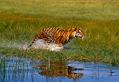 TGR 01 RK0496 10