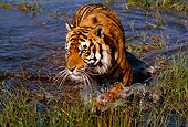 TGR 01 RK0499 09