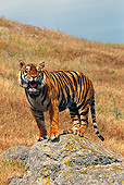 TGR 01 RK0517 02