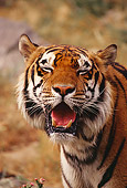 TGR 01 RK0519 02